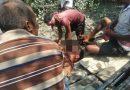 সুন্দরবনে মধু সংগ্রহ করতে গিয়ে বাঘের আক্রমণে নিহত এক ব্যক্তি
