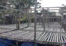 গাঙ্গেয় সুন্দরবন এলাকায় দেখা মিলছে ভাসমান সব্জিক্ষেত